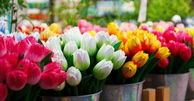 Vasi sempre fioriti